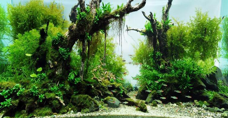 cây thủy sinh không cần đất