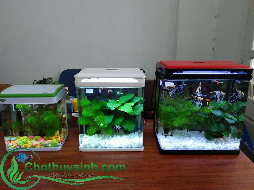 Giá bể cá cảnh đẹp tại Hà Nội uy tín, chất lượng