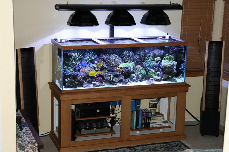 Lựa chọn vật liệu lọc nước hồ cá